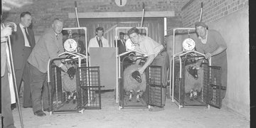 The National Sheep Exhibition in Harrogate in 1959